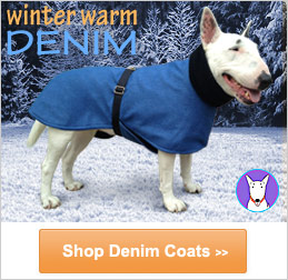buy winter dog coats