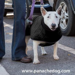 Black Quilted Dog Coat at Panache Dog