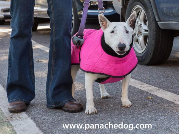 Pink Quilt Dog Coat at Panache Dog